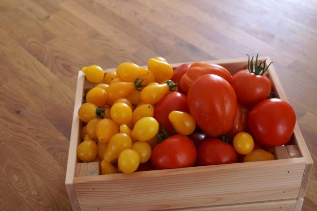 Bunte Tomatenkiste